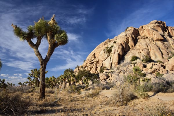 Barren Wilderness Photographs Joshua Tree National Park - Fine Art Prints on Metal, Canvas, Paper & More By Kevin Odette Photography