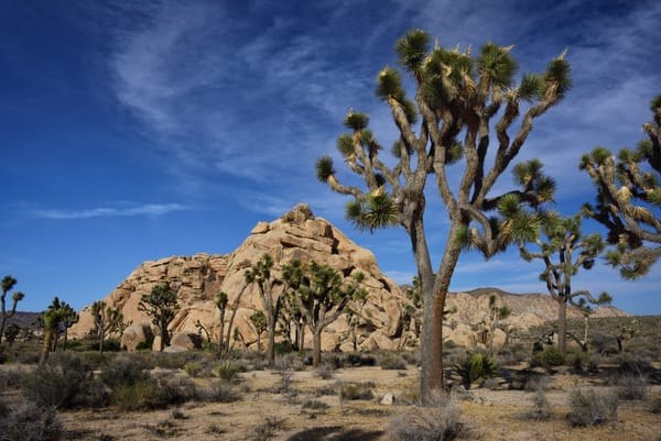 Community Of Praise Photographs Joshua Tree National Park - Fine Art Prints on Metal, Canvas, Paper & More By Kevin Odette Photography