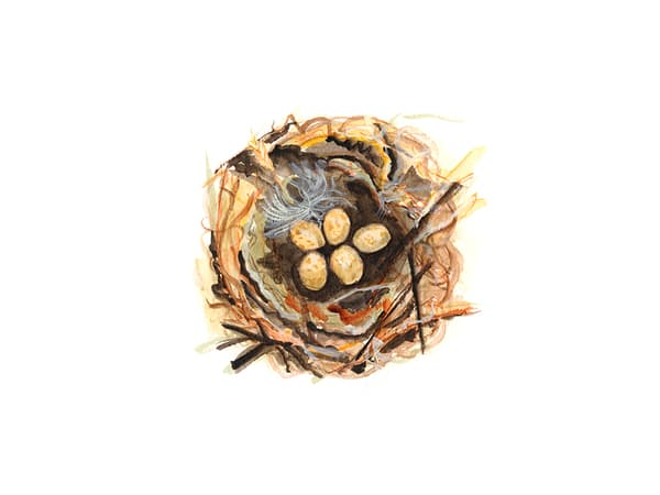 Bird Nest Study #5 Art | Digital Arts Studio / Fine Art Marketplace