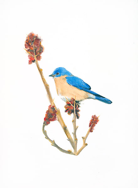 Bluebird #2 Art | Digital Arts Studio / Fine Art Marketplace