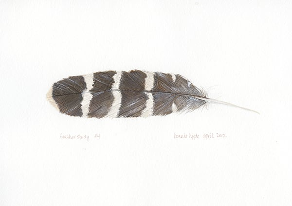 Feather Study #4 Art | Digital Arts Studio / Fine Art Marketplace