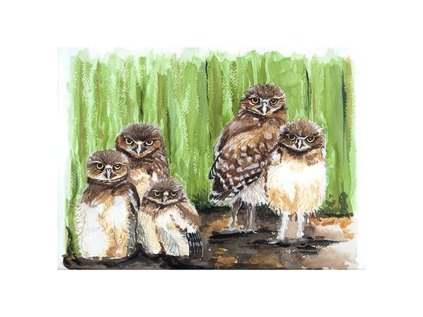 Young Burrowing Owls Art | Digital Arts Studio / Fine Art Marketplace