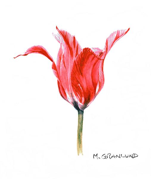 Pink-Striped Elegant Tulip Painting by Mark Granlund