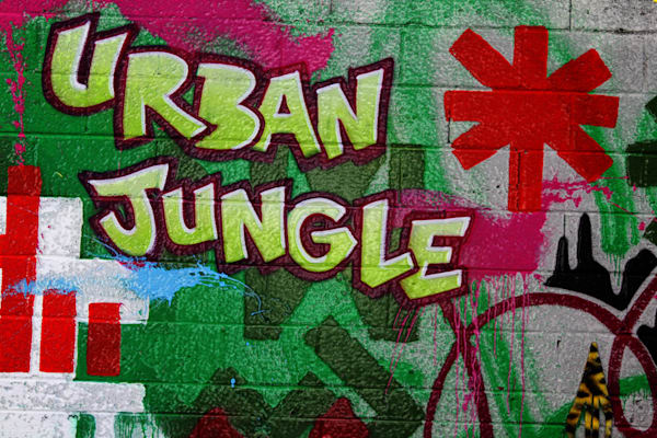 Urban Jungle|Fine Art Photography by Todd Breitling|Graffiti and Street Photography|Todd Breitling Art|