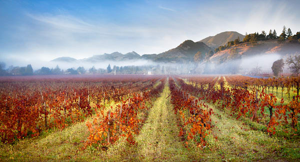 Wine Country by Olof Carmel