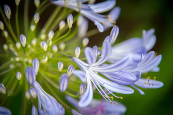 flowers and close ups