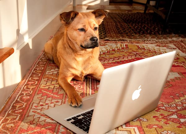 Dog researching on Macbook