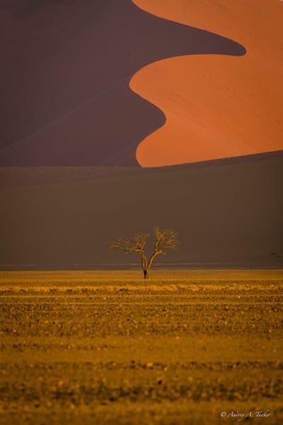 Desert Forms Fine Art Photograph