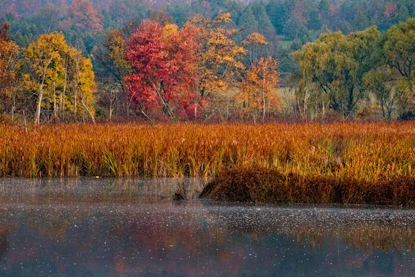 Wetland Rt. 82 Ancramdale