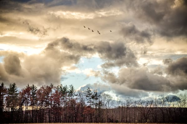 Four Corners Road Farm, Clouds, Geese