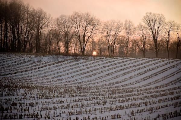 Sunset over snowy cornfield