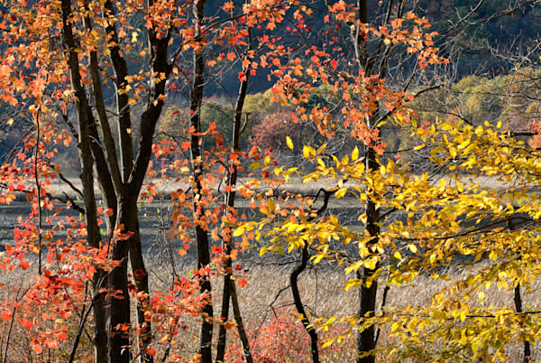 Thompson Pond Autumn Orange Gold