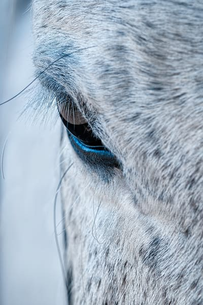 Arabian horse, wildlife and horses,