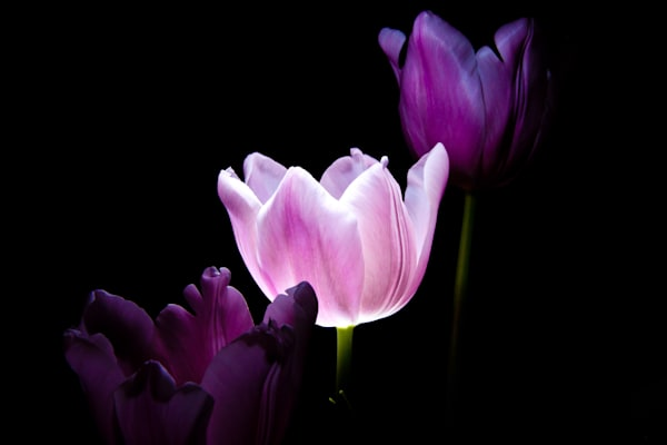 Steve Woodford, purple flower, photo, Enlightened One
