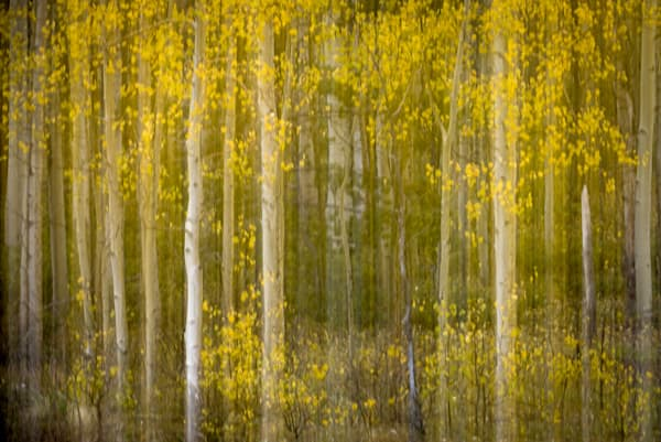Steve Woodford, Aspen Apparition, photo