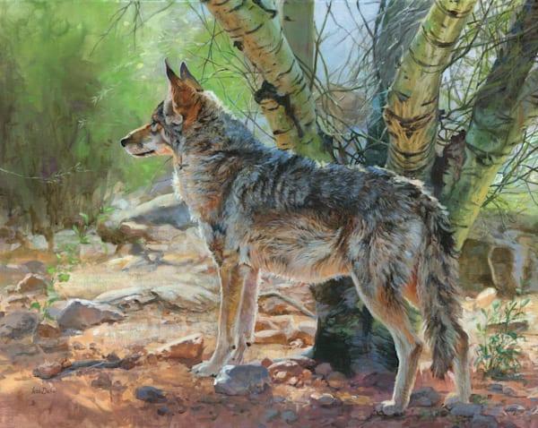 Palo Verde Coyote