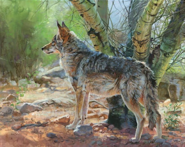 Palo Verde Coyote Art | Lesa Delisi, Fine Arts