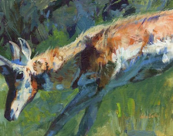 Pronghorn Action Art | Lesa Delisi, Fine Arts