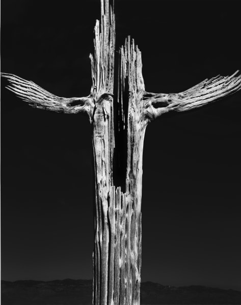 La Cruz del Desierto saguaro cross photograph