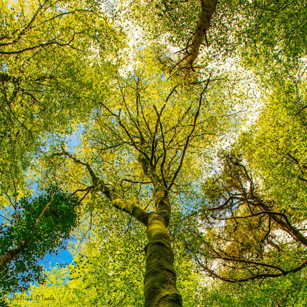 Emerald Forrest