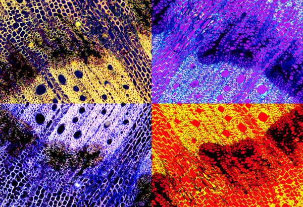 Palo Verde Microscope Mosaic color photograph