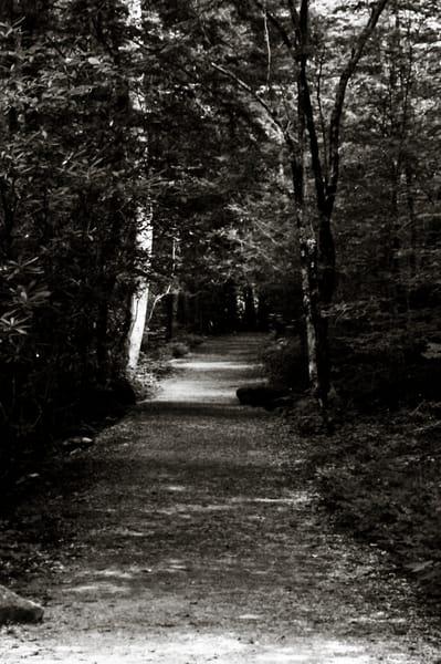Dark Woods Art   Artist David Wilson
