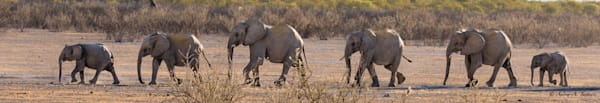 Elephant Line Up Fine Art Photograph