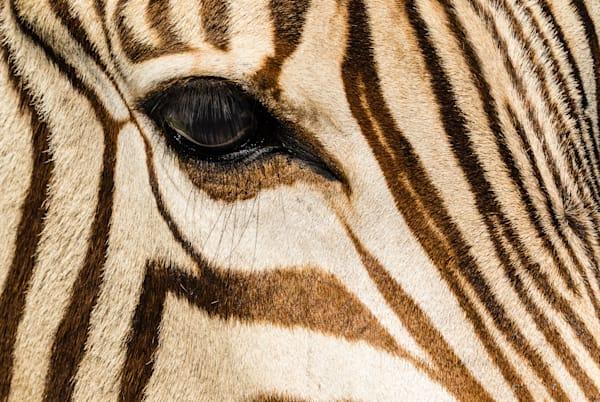 Zebra Eye Fine Art Photograph