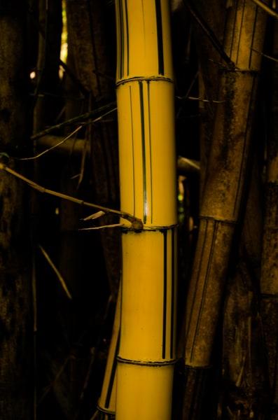 Mau Bamboo 006