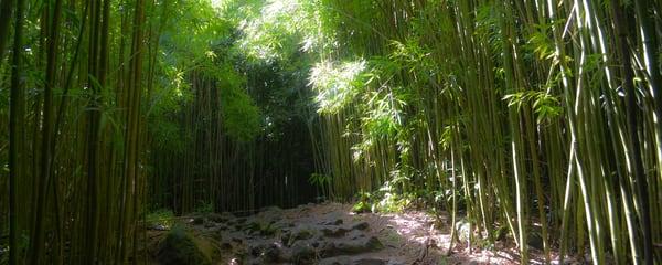 Bamboo 008