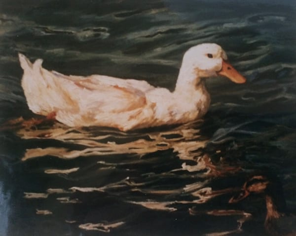 Duck on Water