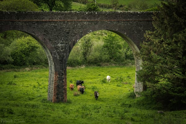 'til The Cows Come Home Photography Art | Patrick O'Toole Photography, LLC