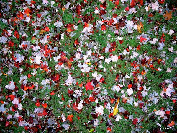 Fall Maple Leaf Display Print