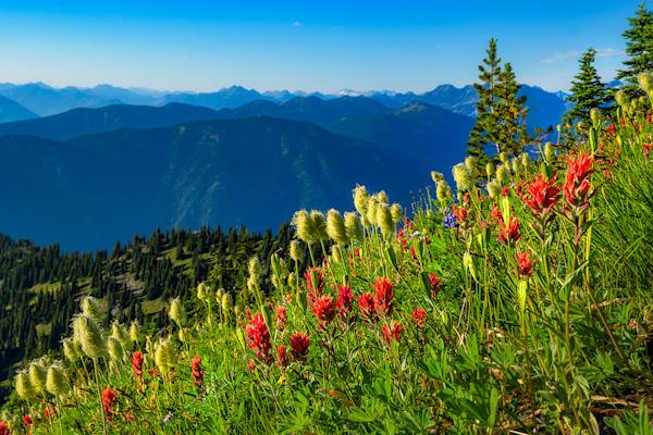 Idaho Peak Wild Flowers Art | Nelson Fine Art Printing
