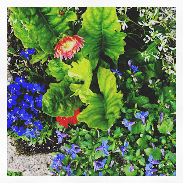 June Planter Instagram Photo