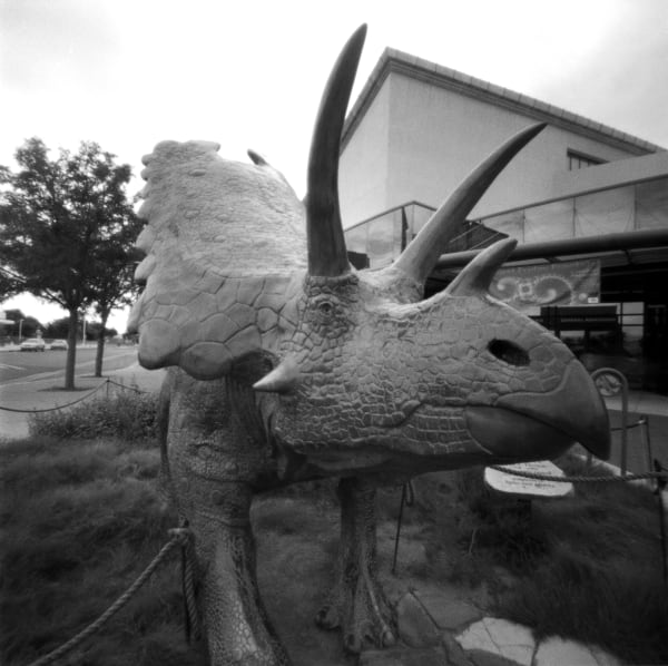 Triceratops, When Dinosaurs Ruled The Earth pinhole photograph
