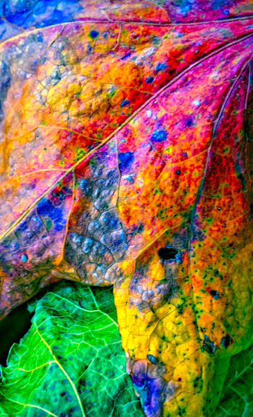Fall Colors Gather|Fine Art Photography by Todd Breitling|Trees and Leaves|Todd Breitling Art|
