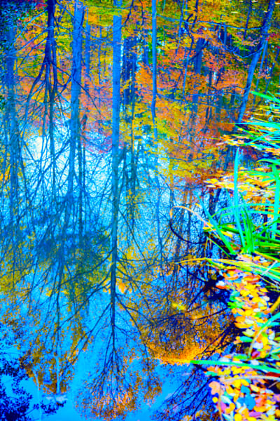 Fall Pond Reflection|Fine Art Photography by Todd Breitling|Trees and Leaves|Todd Breitling Art