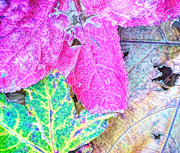 Colors Of The Season|Fine Art Photography by Todd Breitling|Trees and Leaves|Todd Breitling Art|