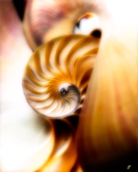 Nautilus Fine Art Cut Shell