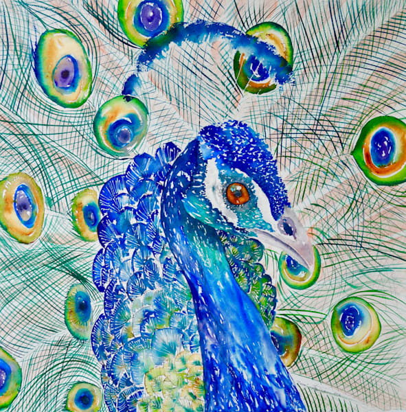 Pierre the Peacock