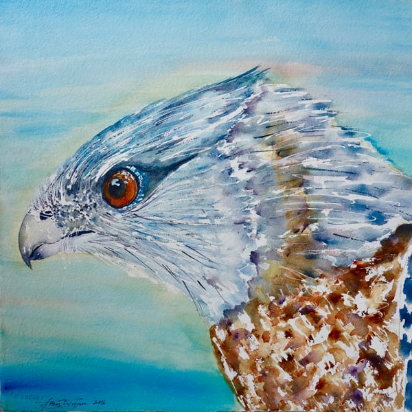 Gary the Cooper's Hawk