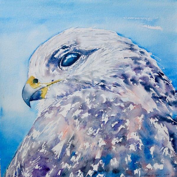 Ingrid the Ferruginous Hawk
