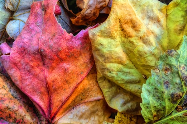 Fall Ground Color|Fine Art Photography by Todd Breitling|Trees and Leaves|Todd Breitling Art