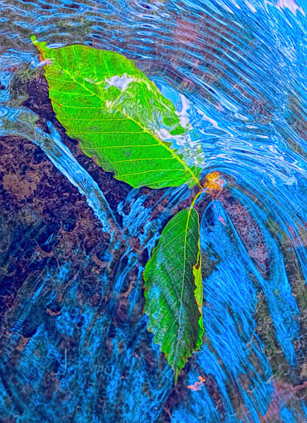 Green Leaves In A Stream|Fine Art Photography by Todd Breitling|Trees and Leaves|Todd Breitling Art