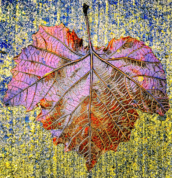 Wet Leaf Wednesday|Fine Art Photography by Todd Breitling|Trees and Leaves|Todd Breitling Art|