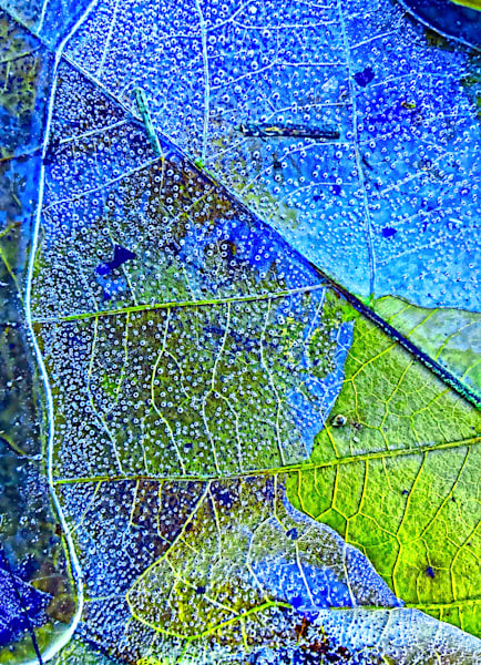 Ice Bubbles and Leaf Lines|Fine Art Photography by Todd Breitling|Trees and Leaves|Todd Breitling Art|