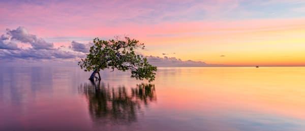 Majestic Mangrove