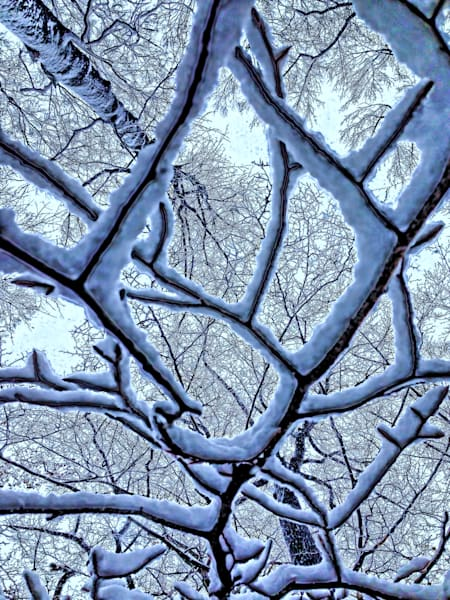 Winters Web|Fine Art Photography by Todd Breitling|Trees and Leaves|Todd Breitling Art