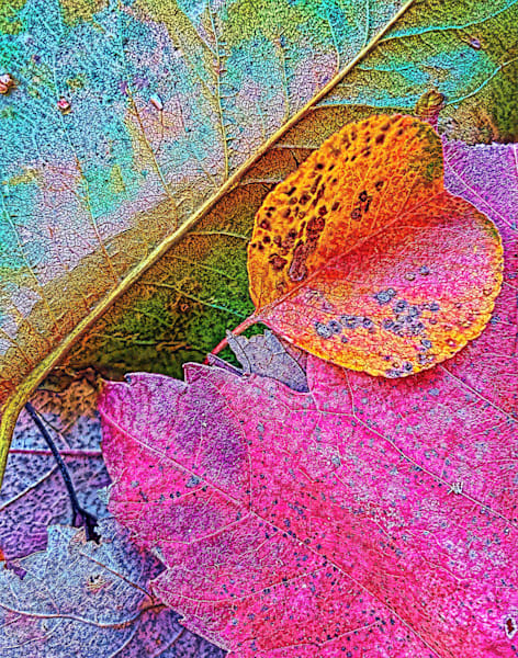 Ready To Find|Fine Art Photography by Todd Breitling|Trees and Leaves|Todd Breitling Art